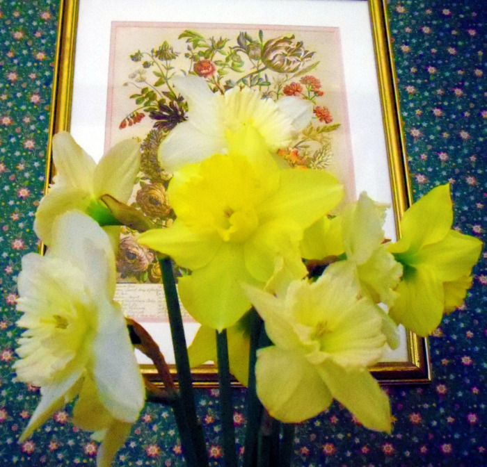 Day 87 - Daffies