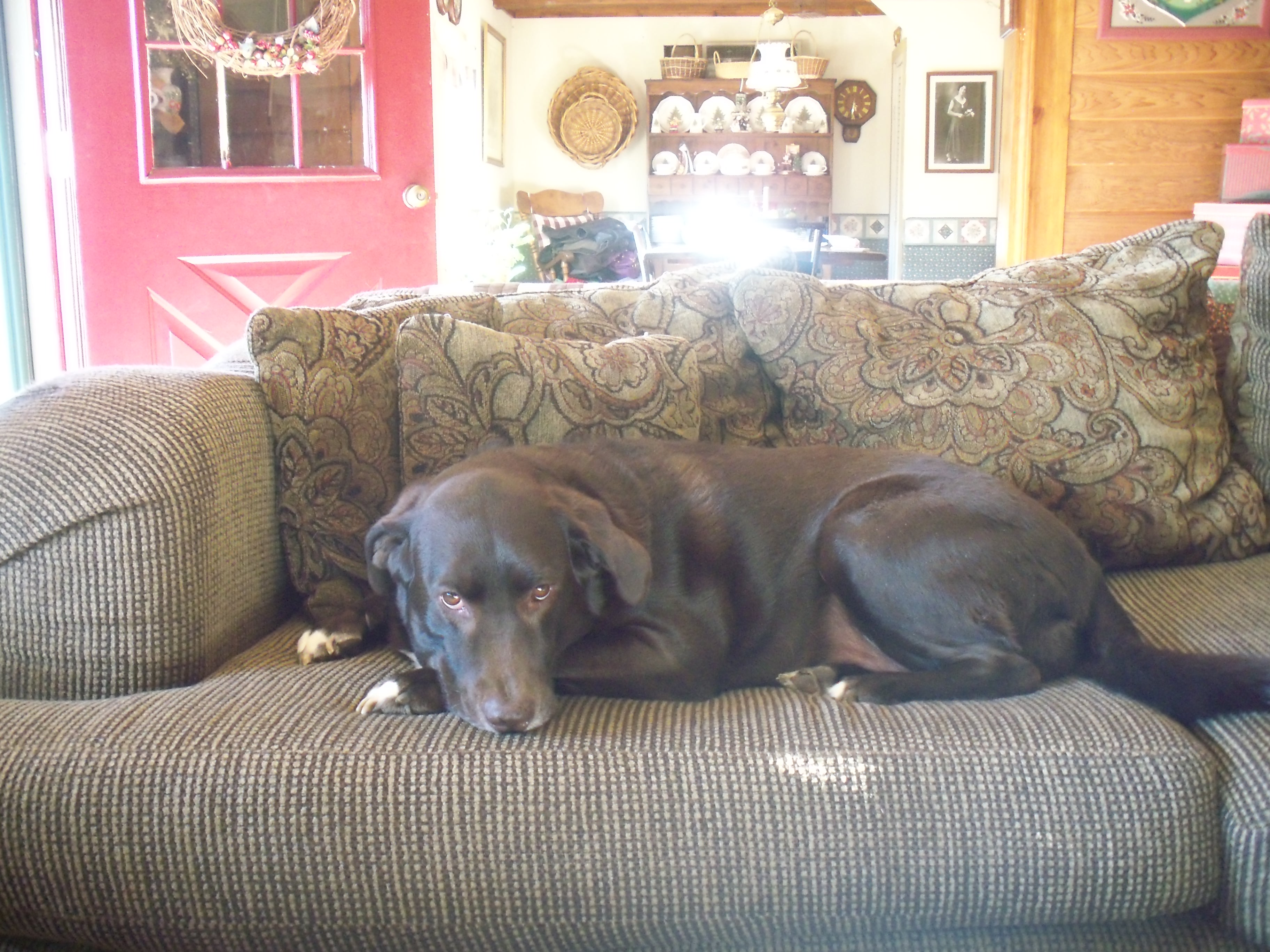 Doofus Dawg on Couch