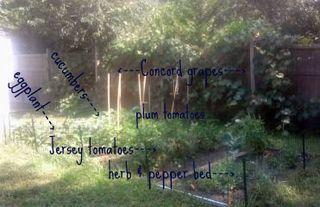 This Full House Vegetable Garden 2