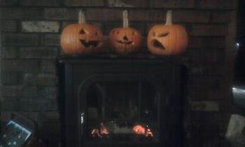 TFH Pumpkins All in a Row
