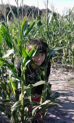 Hopey Corn Maze 2010