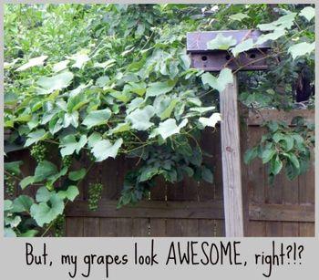 TFH Grapes 2
