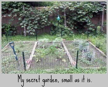 TFH Vegetable Garden 2