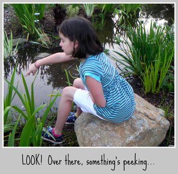 Something's Peeking