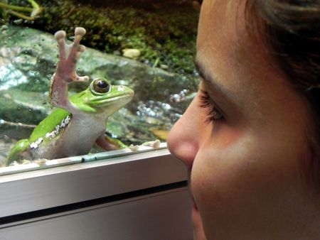 Kleenex Field Trip to AMNH Frog and Hope