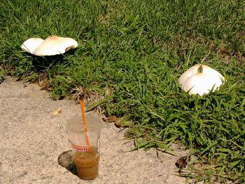 Racy Mushrooms