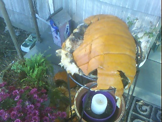 The Dead Pumpkin 2007