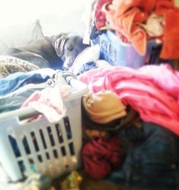 BEWARE Guard Dog on Laundry!