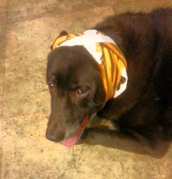 Doofus-Dawg broke again