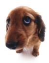 Animalparadisedog_2