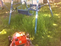 Swinggrass